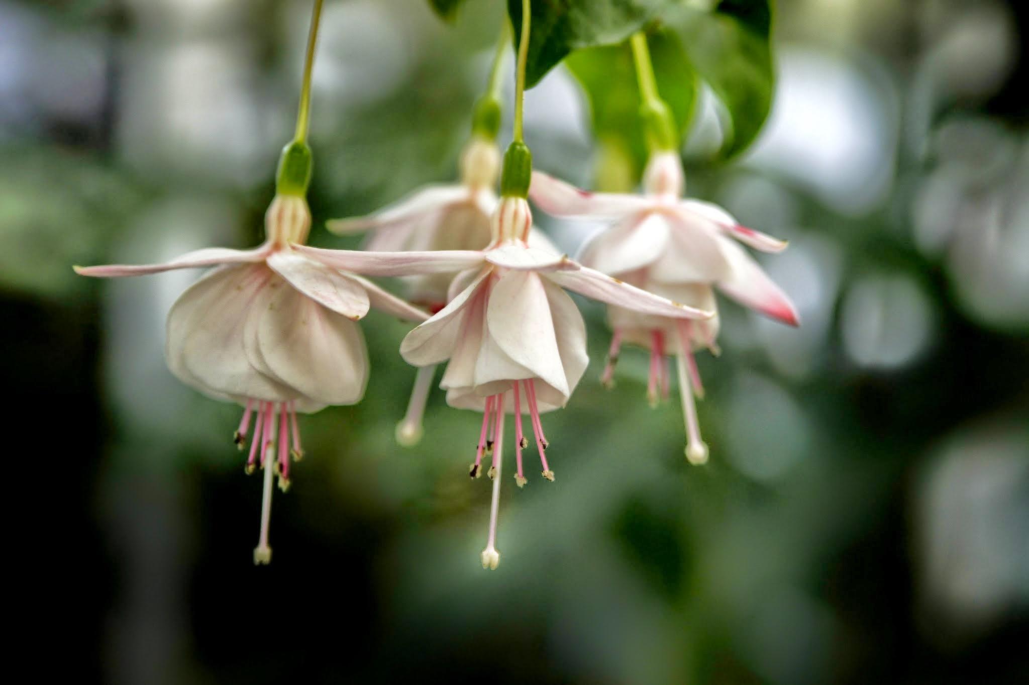 Spätsommer im Botanischen Garten Erlangen